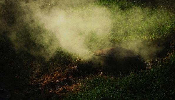 Smoke Burn Landscapes Mist Nature Grass Lawn Fog L