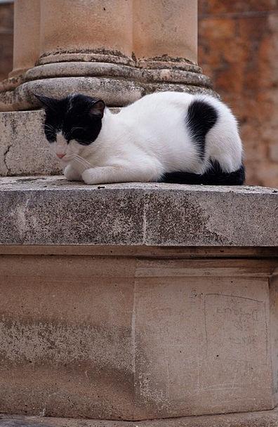 Cat Feline Domesticated Sleeping Asleep Pet Animal