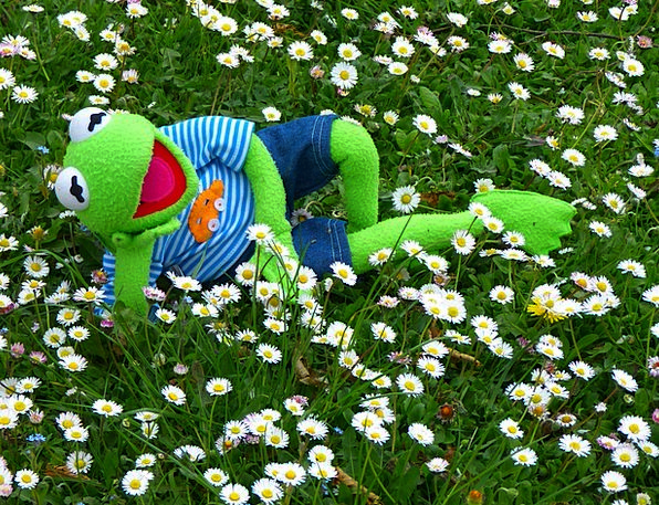 Kermit Meadow Field Frog White Daisy Doll Concerns