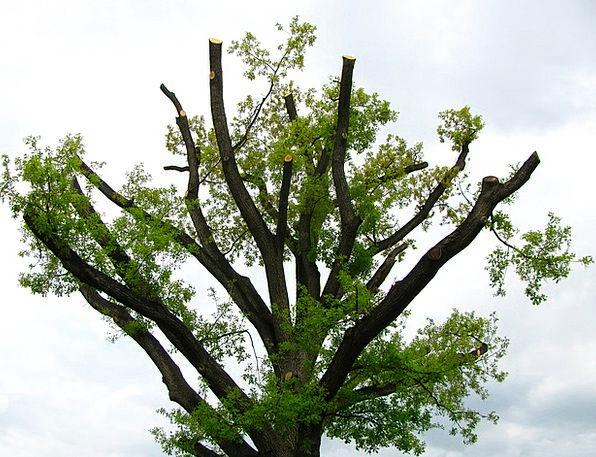 Tree Sapling Landscapes Countryside Nature Plant V