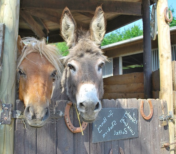 Donkey Horse Beast Of Burden Pony Ears Workhorse R