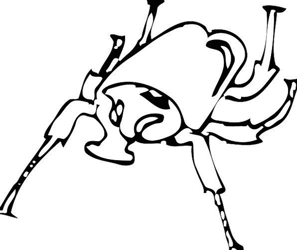 Wings Annexes Bug Beetle Insect Legs Limbs Horned