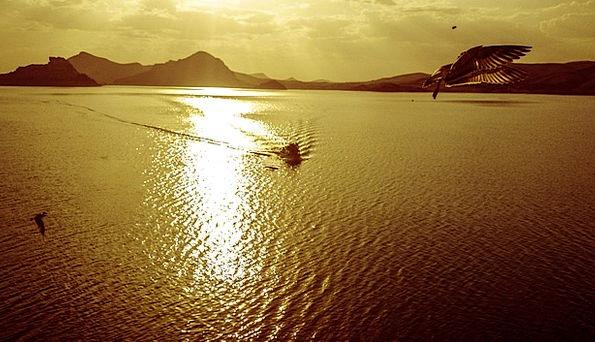 Sunset Sundown Vacation Seashore Travel Seagull Be