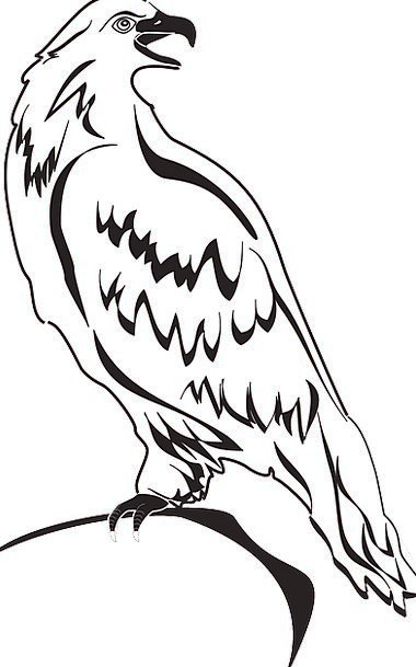 Back Spinal Bird Fowl Eagle Wings Annexes Free Vec