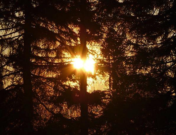 Forest Woodland Landscapes Sapling Nature Sun Tree