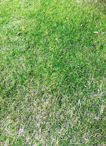 Grassland Prairie Landscapes Lime Nature Plant Veg