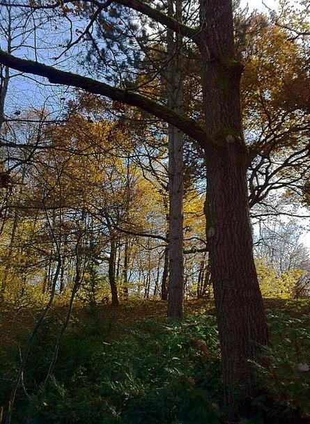 Munich Landscapes Nature Park Common Westpark Autu