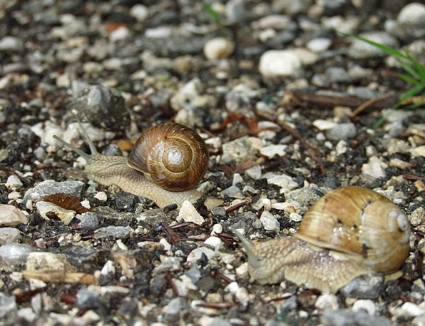 Snail Landscapes Countryside Nature Path Trail Nat