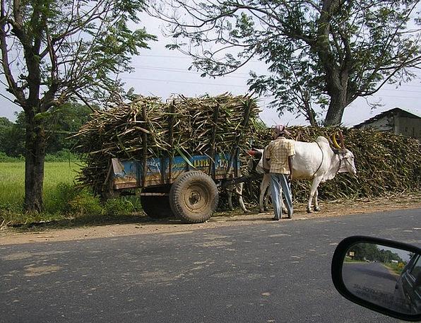 Cart Wagon Traffic Transportation Ox Cart Bullock