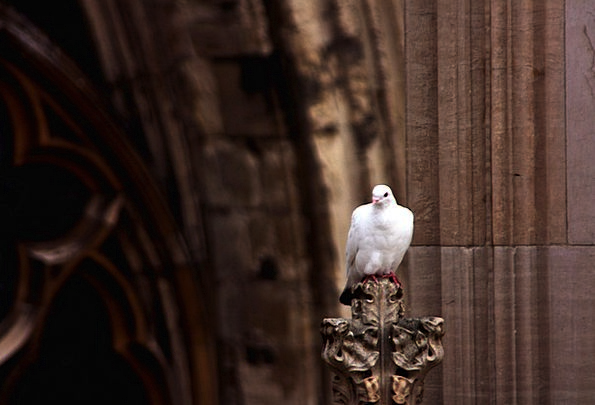 Pigeon Mark Fowl White Snowy Bird Cathedral Church