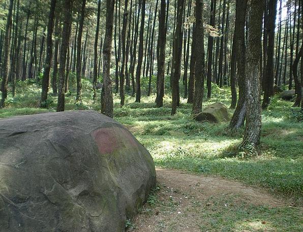 Stone Pebble Landscapes Woodland Nature Trees Plan