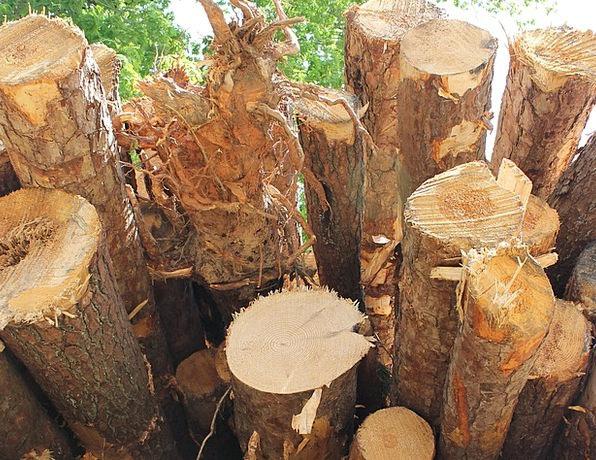 Timber Wooden Wood Lumber Woodpile Tree Log Stack