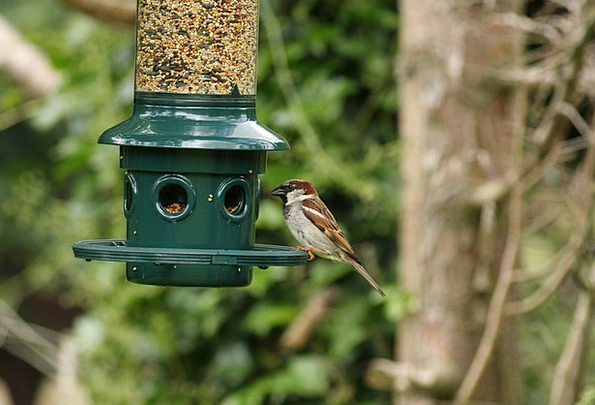 Bird Fowl Natures Sparrow Birds Feeder Feeding Nat