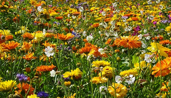 Flower Meadow Plants Field Of Flowers Flowers Summ