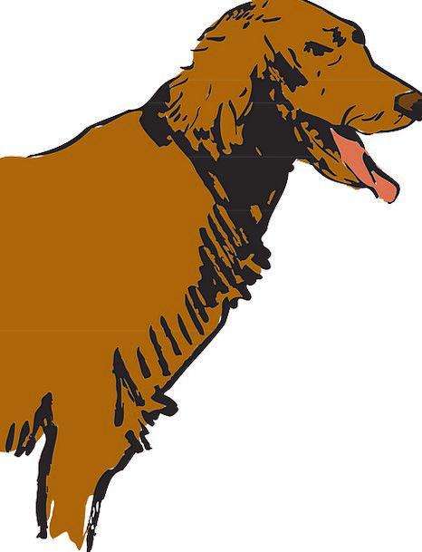 Dog Domesticated Canine Doglike Pet Animal Physica