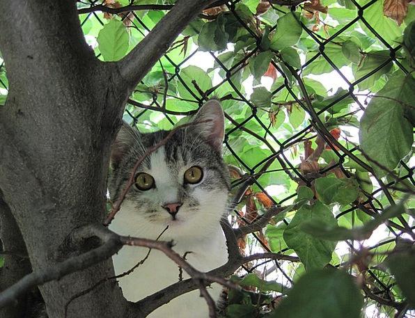 Cat Feline Inquisitive Hangover Aftermath Curious