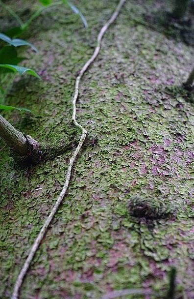 Log Record Bay Christmas Tree Bark Tree Bark Fouli