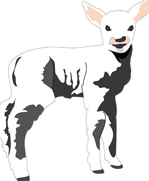 Sheep, Ewe, Darling, Lamb, Beef, Baby, Barn, Outbuilding, Wool, Farm
