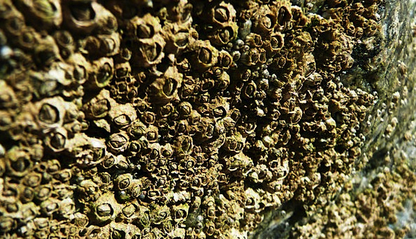 Shells Bullets Vacation Shingle Travel Rock Pillar