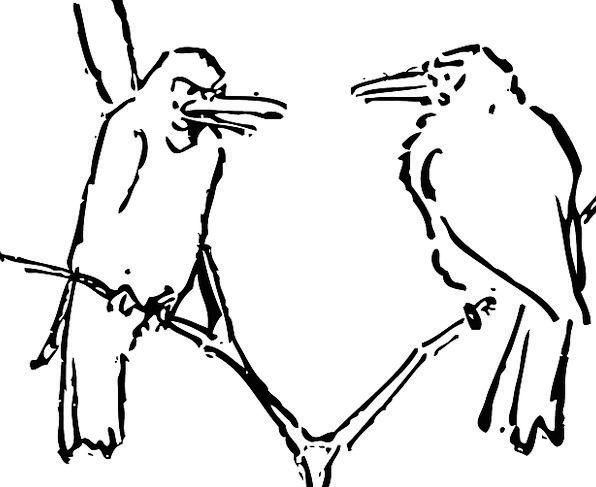 Birds Natures Landscapes Balanced Nature Tree Sapl