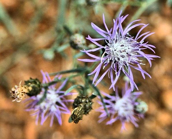 Wild Flower Landscapes Floret Nature Floral Flower
