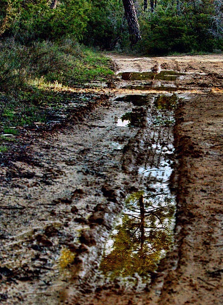 Reflection Likeness Landscapes Trail Nature Mud Mi
