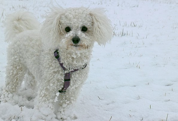 Animal Physical Canine Snow Snowflake Dog Winter S