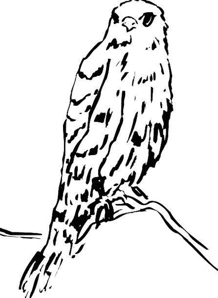 Bird Fowl Skull Branch Division Head Watching View