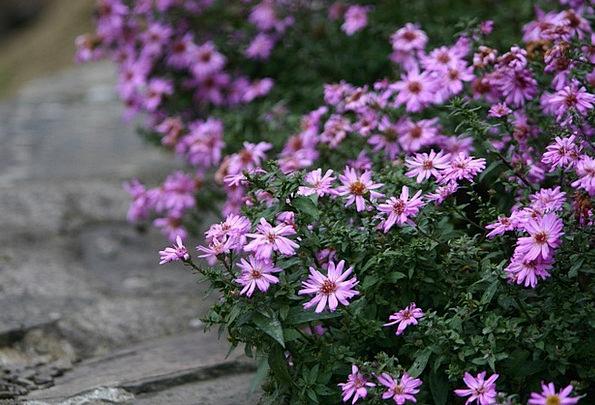 Flowers Plants Landscapes Flushed Nature Nature Co