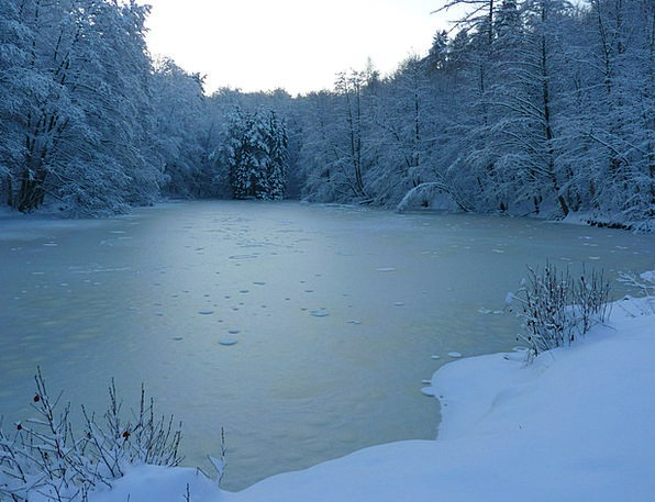 Winter Season Understand Ice Frost See Water Aquat