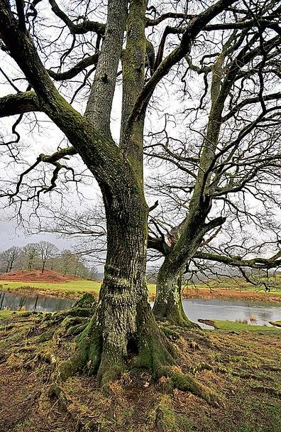 Tree Sapling Landscapes Nature Water Aquatic Cumbr