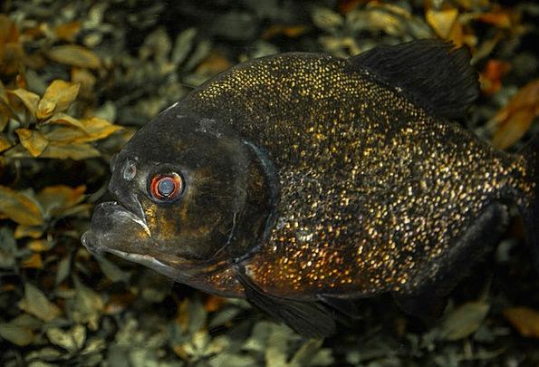 Animal Physical Angle Predatory Fish Fish Tooth Pr