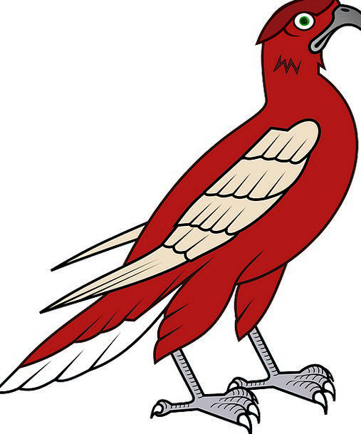 Hawk Warmonger Fowl Falcon Bird Avian Hunter Preda