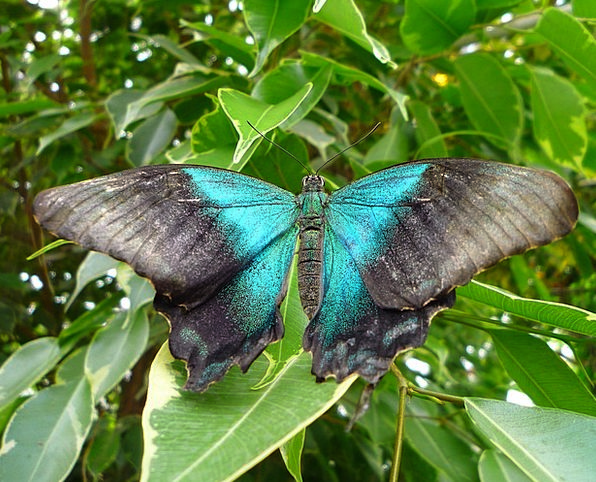 Butterfly Annexes Animal Physical Wings Wildlife N