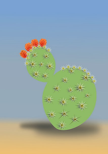 Cactus Landscapes Reward Nature Dry Thirsty Desert