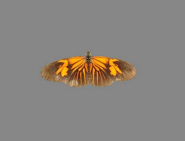 Butterfly Nice Enjoyable Mot Night Nightly Butterf