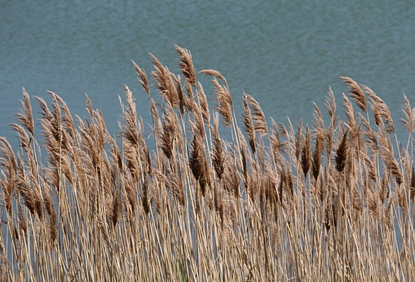 Grasses Lawns Landscapes Countryside Nature Enviro