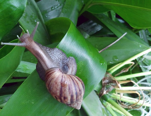 Snail Bomb Slow Sluggish Shell Leaves Spiral Twist