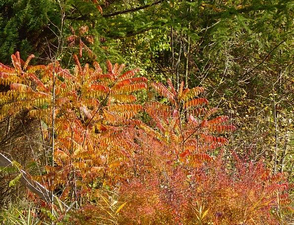 Autumn Fall Fall Foliage Golden Autumn Leaves Gree