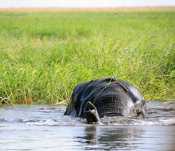 Elephant Monster Landscapes Nature Botswana Africa
