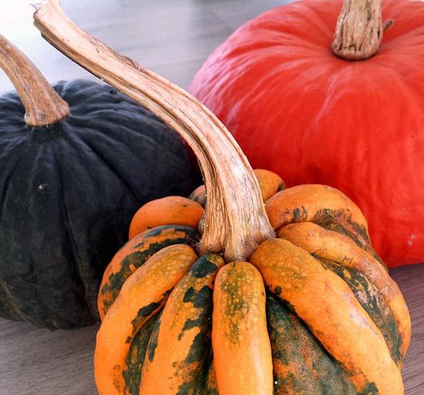 Pumpkins Dark Orange Carroty Black Variety Diversi