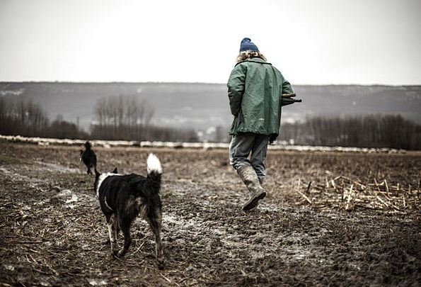 Shepherd Marshal Isolated Dog Canine Lonely Loneli