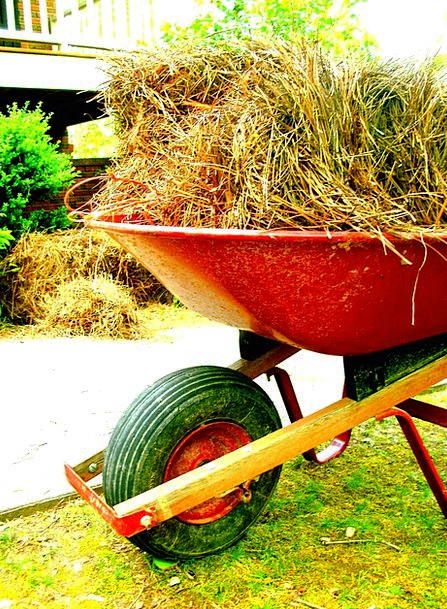 Wheelbarrow Barrow Outdoor Outside Equipment Gear