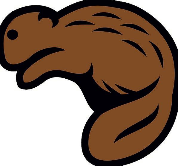 Beaver Work Physical Mammal Creature Animal Wildli