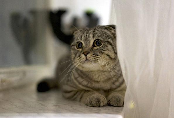 Cat Domesticated Cute Attractive Pet Kitten Lying