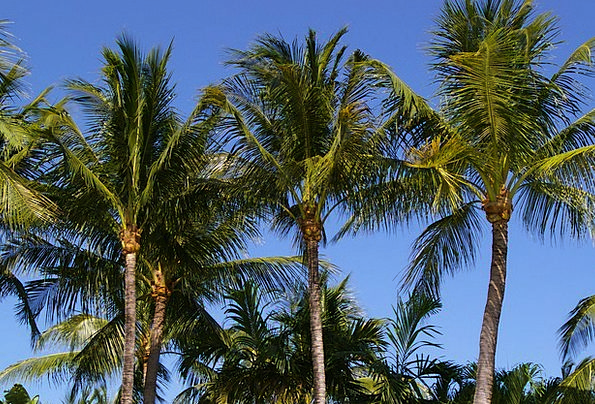 Sky Blue Landscapes Nature Nature Countryside Palm