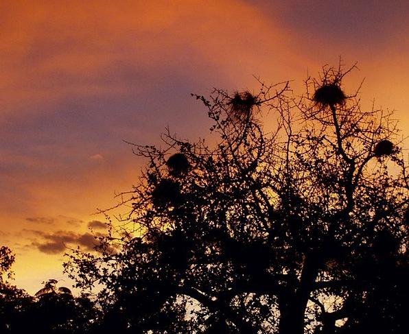 Sky Blue Shells Tree Sapling Nests Twilight Dusk