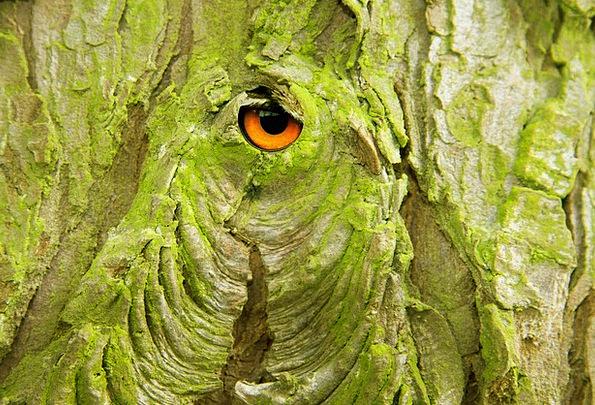 Bark Bay Coating Tree Sapling Layer Eye Cork Stopp