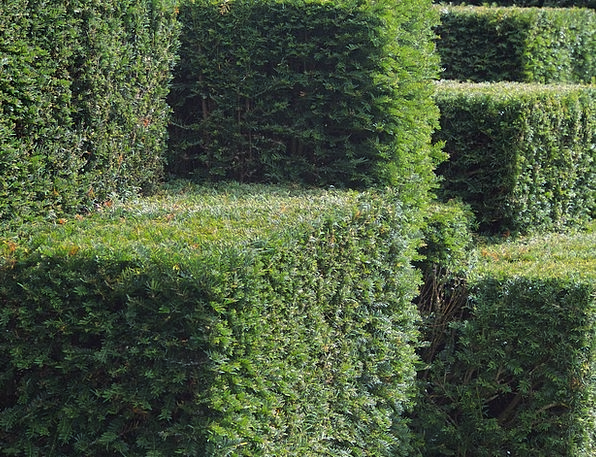 Green Lime Textures Hedgerow Backgrounds Topiary H