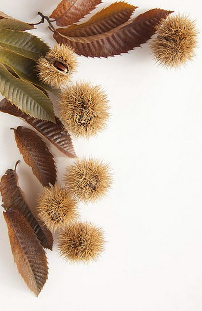 Sweet Chestnuts Landscapes Anecdotes Nature Nature